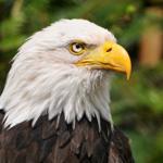 Image of Eagle Sponsorship