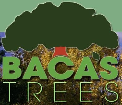 Baca's Trees